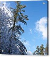 Winter Tree And Sky Acrylic Print