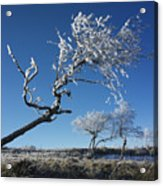Winter Tree. Acrylic Print by Bernard Jaubert