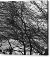 Winter Tree Branches Acrylic Print