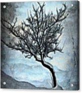 Winter Tree II Acrylic Print