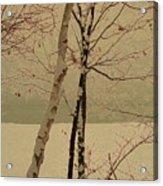 Winter Tree Over Bay Acrylic Print