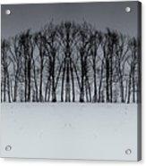 Winter Tree Symmetry Long Horizontal Acrylic Print