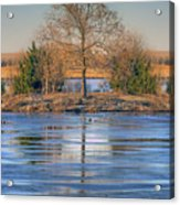 Winter Tree - Walnut Creek Lake Acrylic Print
