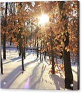 Winter Trees #1 Acrylic Print