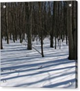 Winter Trees In Snow With Shadow Lines Acrylic Print