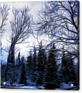 Winter Trees In Sweden Acrylic Print