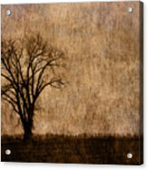 Winter Trees In The Bottomland 1 Acrylic Print