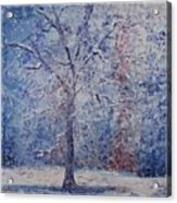 Winter Trees Acrylic Print