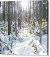 Winter Under The Sun Acrylic Print