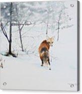 Winter Visitor Acrylic Print