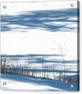 winter weeds SCN M 80 Acrylic Print