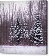 Winter White Magic Acrylic Print