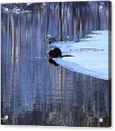 Winter Wildlife In New England Acrylic Print