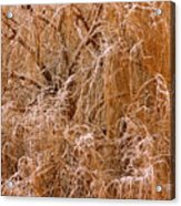 Winter Willow Branches Acrylic Print