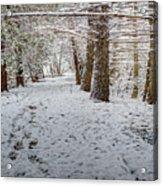 Winter Wonder Land Acrylic Print