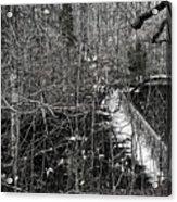 Winter Woods Acrylic Print