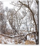 Winter Woods On A Stormy Day 2 Acrylic Print