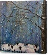 Winter Wool  Acrylic Print