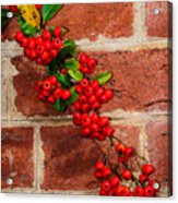 Winterberry 0028 Acrylic Print