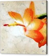 Winterbloom Acrylic Print