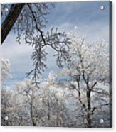 Winter's Arrival Acrylic Print