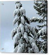 Winter's Burden Acrylic Print