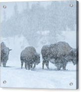 Winter's Burden Acrylic Print by Sandra Bronstein