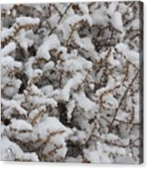 Winter's Contrast Acrylic Print