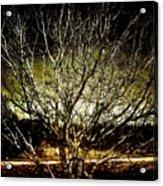Winters Dawn Acrylic Print
