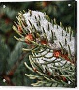 Winter's Fling Acrylic Print