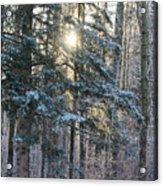 Winter's Midday Light Acrylic Print