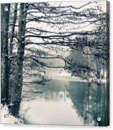 Winter's Reach II Acrylic Print