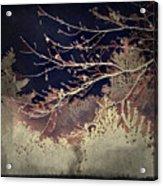 Wintervwoods Acrylic Print