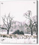 Wintery Morning Acrylic Print
