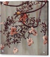 Wintry Elegance Acrylic Print