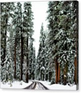 Wintry Forest Drive Acrylic Print