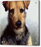 Wire Fox Terrier Acrylic Print