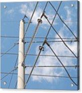 Wired Sky Acrylic Print