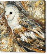 Wise Owl 4 Acrylic Print