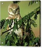 Wise Watcher Acrylic Print