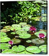Wishes Among The Water Lilies Acrylic Print