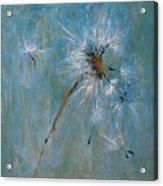 Wishes Acrylic Print