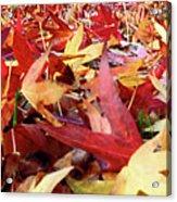 Wishing For Fall Acrylic Print