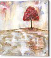 Wishing Tree Acrylic Print