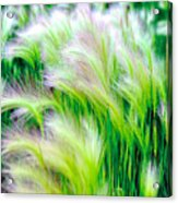 Wispy Green Acrylic Print