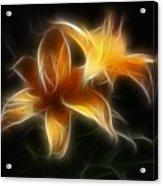 Wispy Lilies Acrylic Print