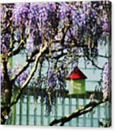 Wisteria And Birdhouse Acrylic Print