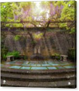 Wisteria Blooming On Trellis At Garden Patio Acrylic Print