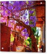 Wisteria Canopy In Bisbee Arizona Acrylic Print