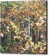 Witch Hazel Forest Acrylic Print